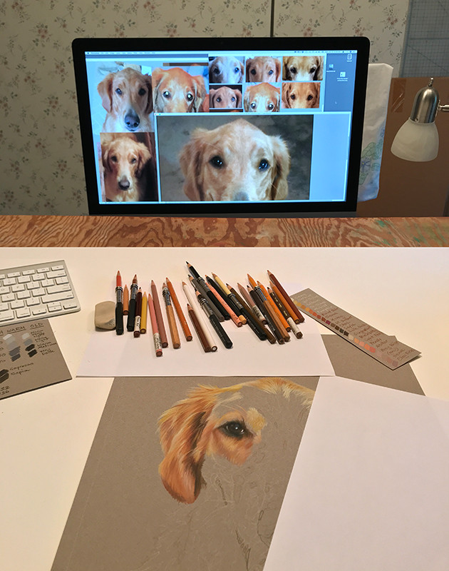In the studio with colored pencils, working on a portrait of a  Golden Retriever dog.