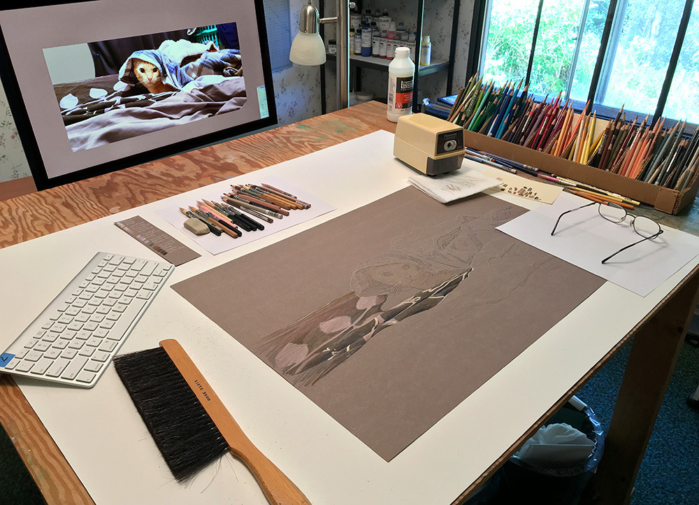 Prismacolor pencil portrait of cat in progress in Kevin Roeckl's art studio
