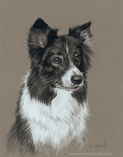 """Lindsay"" (Border Collie)"