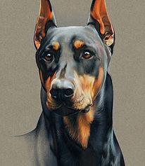 Fine art portrat of Doberman Pinscher