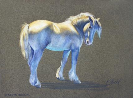 Portrait of Buddy (draft horse)
