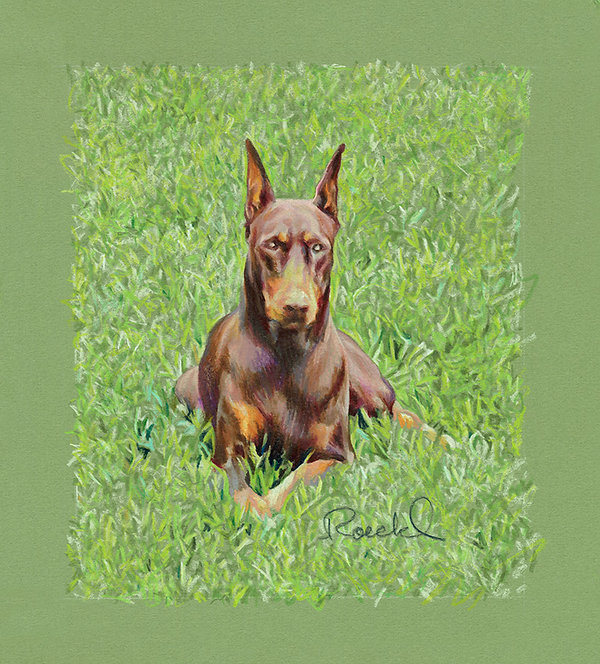 """Little Jewel"" colored pencil portrait of red Doberman on green grass"
