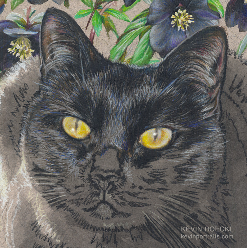 Close-up detail of colored pencil portrait of black cat, in progress