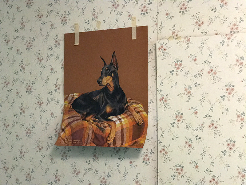 Colored pencil portrait of a black Doberman in progress, taped up on the wall of Kevin's art studio