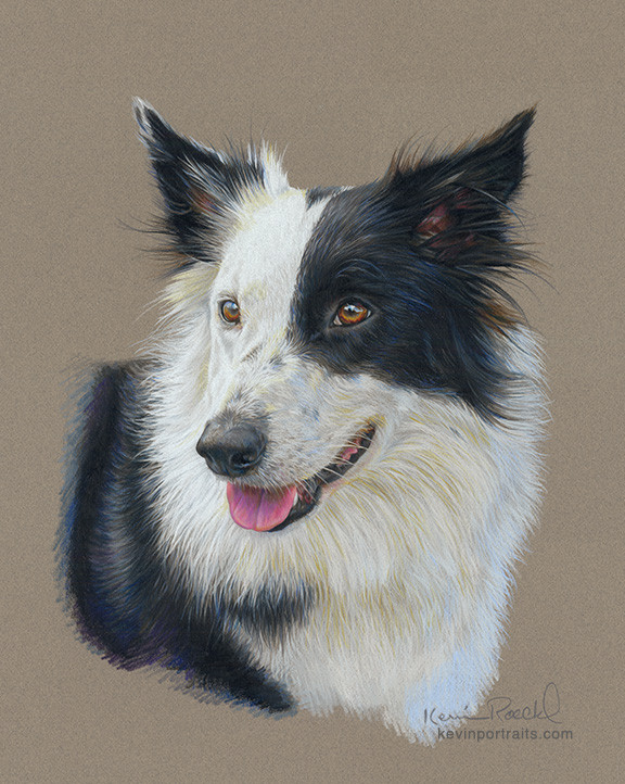 Prismacolor pencil portrait of Border Collie on Canson Mi-Teintes paper by artist Kevin Roeckl
