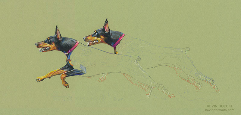 Colored pencil portrait of two Dobermans running, in progress