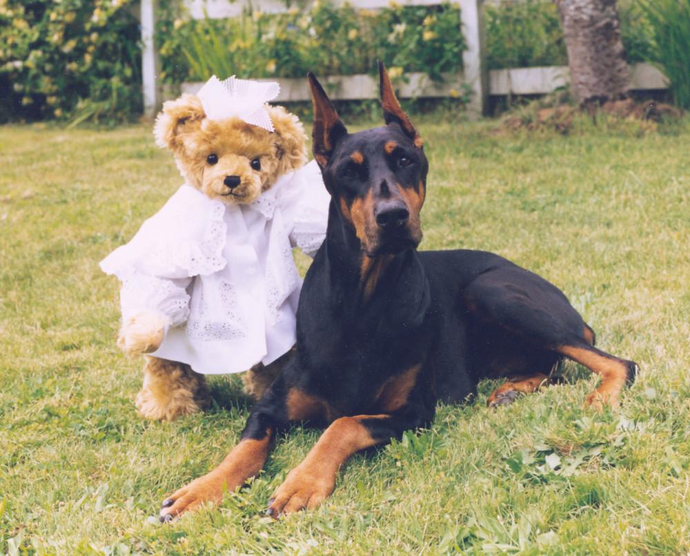 Handmade teddy bear posing with black Doberman dog