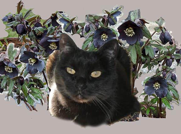 Rough layout for Head Study cat portrait
