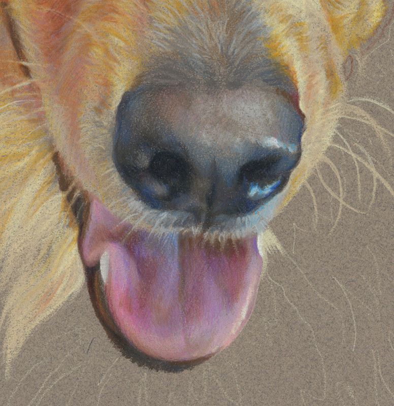 Close-up of dog's nose and tongue in colored pencil fine art portrait