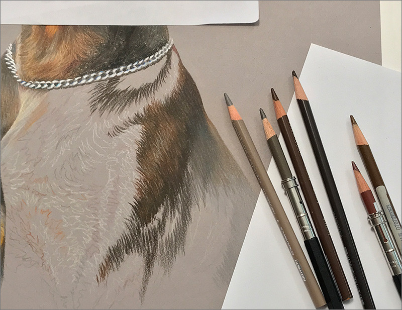 Close-up of colored pencil portrait of red Doberman in progress, with colored pencils
