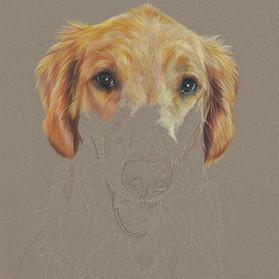 Carly portrait in progress 4