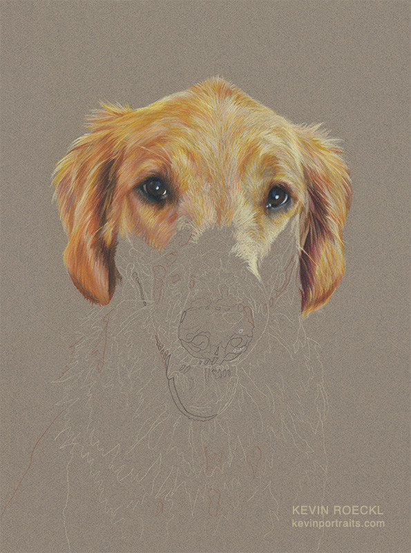 Fine art portrait of  Golden Retriever Service Dog, in progress