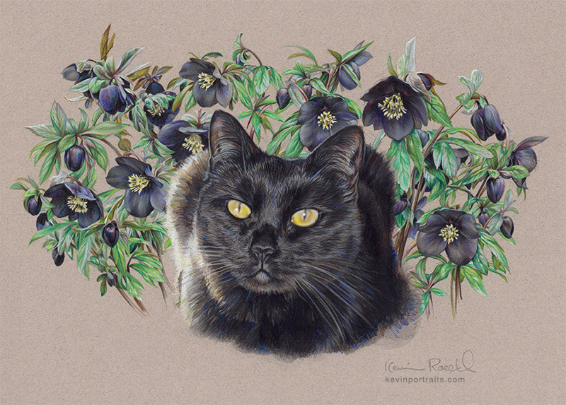 FIne art portrait of black cat with black hellebore flowers, in Prismacolor pencil and watercolor, by artist Kevin Roeckl