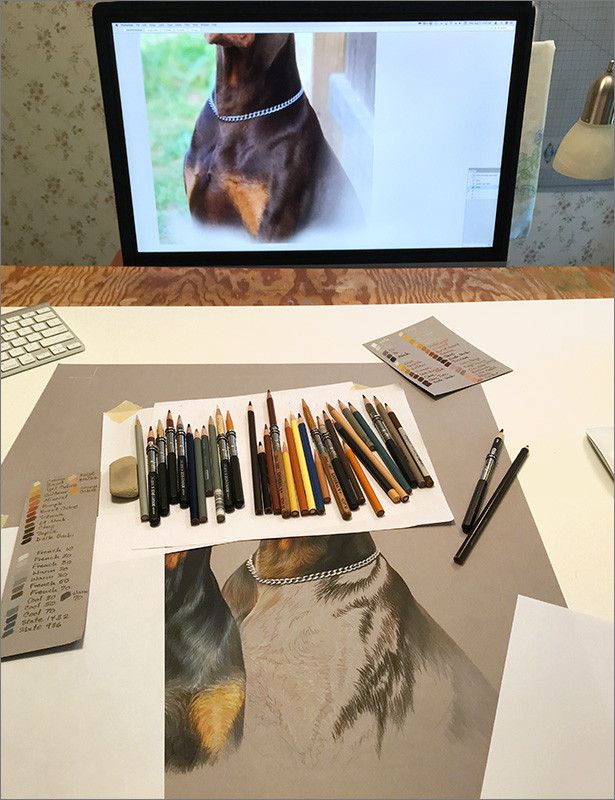 Colored pencil portrait of black Doberman and red Doberman, in progress in Kevin's studio, with colored pencils and reference photo on the monitor