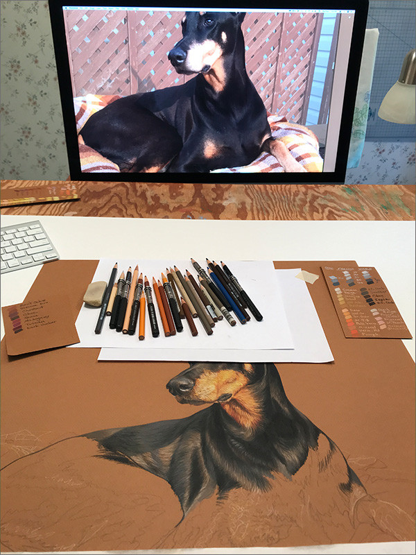 Colored pencil portrait of a Doberman in progress in Kevin's art studio, with pencils and reference photo on the monitor