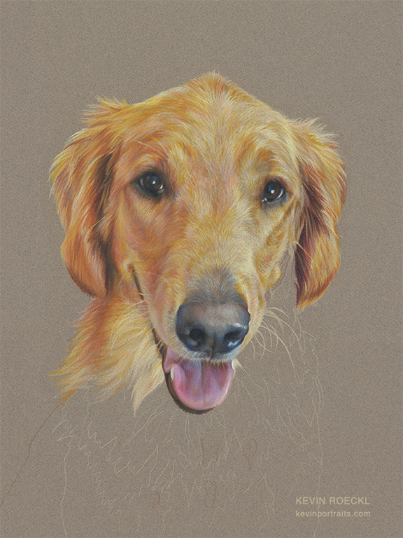 Colored pencil portrait of Golden Retriever dog, in progress