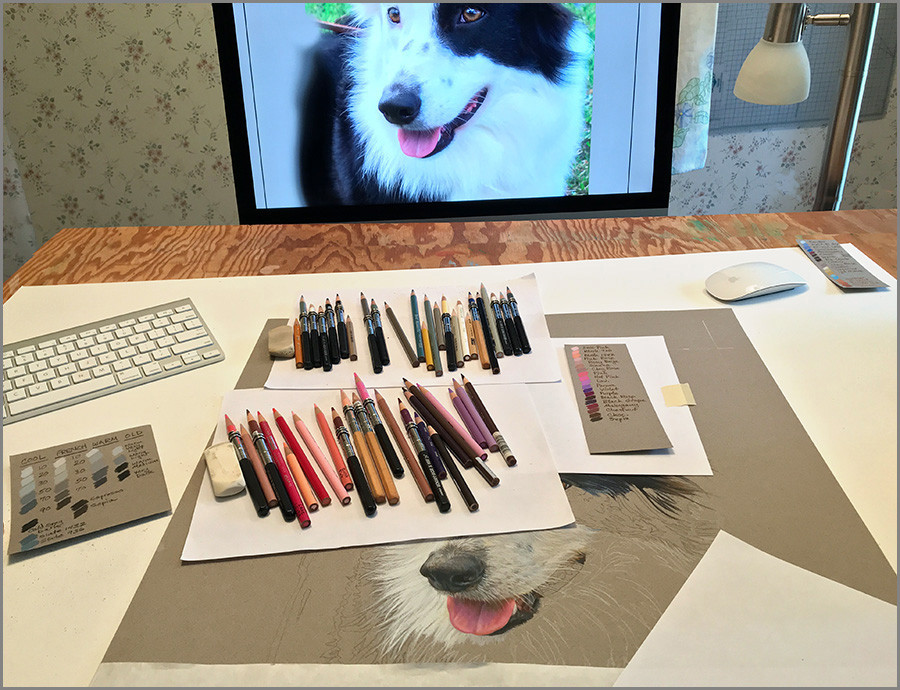Colored pencils and fine art portrait of a Border Collie dog, in progress with reference photo in an art studio