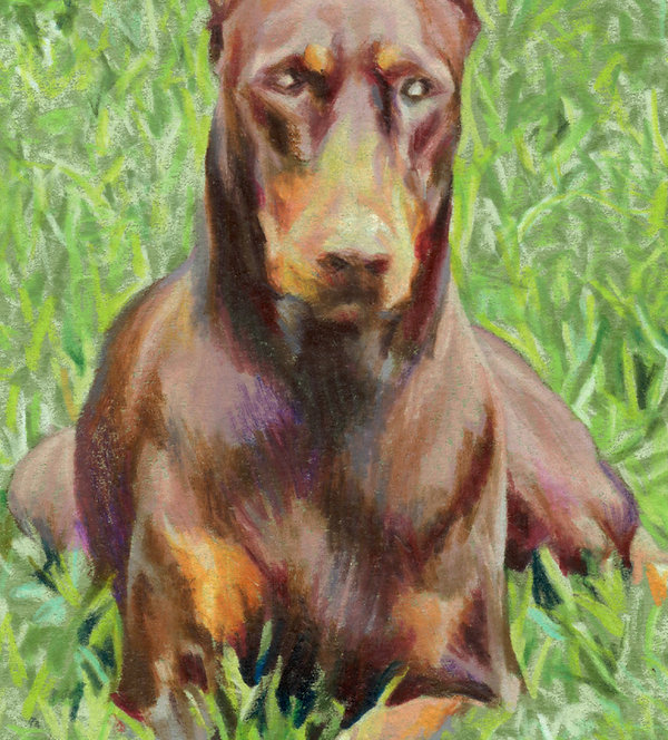 "Close-up of ""Little Jewel"" colored pencil portrait of red Doberman on green grass"