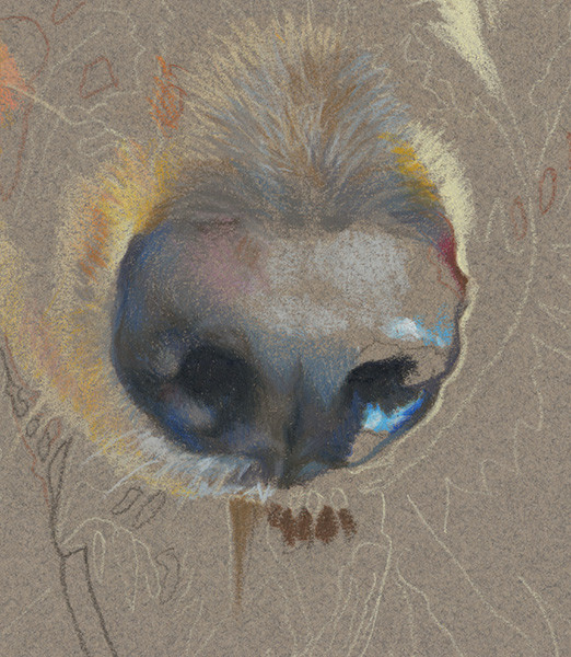 Close-up of dog's nose in Head Study portrait in progress