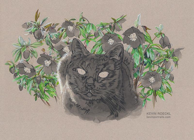Portrait of black cat with hellebore flowers, in progress