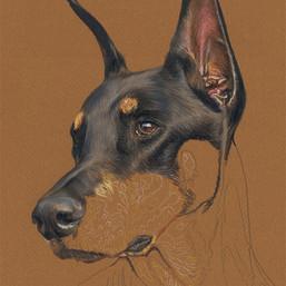 Louie portrait in progress - start to finish