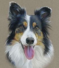 Fine art portrait of dog, Australian Shepherd