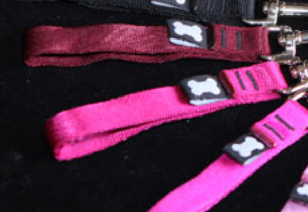 Reference photo of dog collar colors