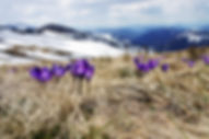 spring, motivacion personal, cambia tu vida, aproveca el tiempo