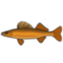 fish walleye.png