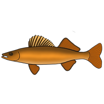 fish walleye.png