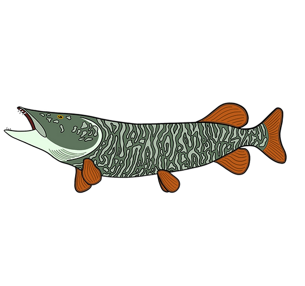 fish%20muskie_edited.png