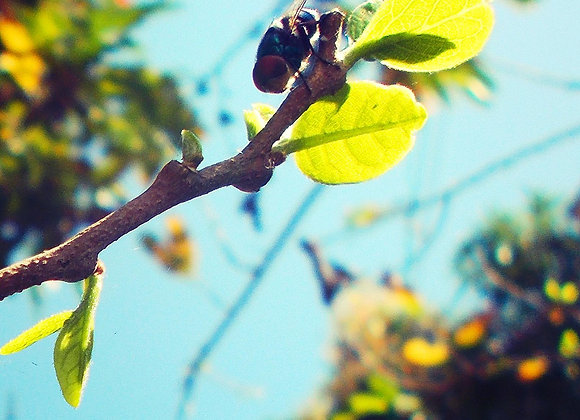 Bee on a Twig