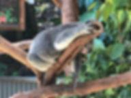 koala_gardens.jpg