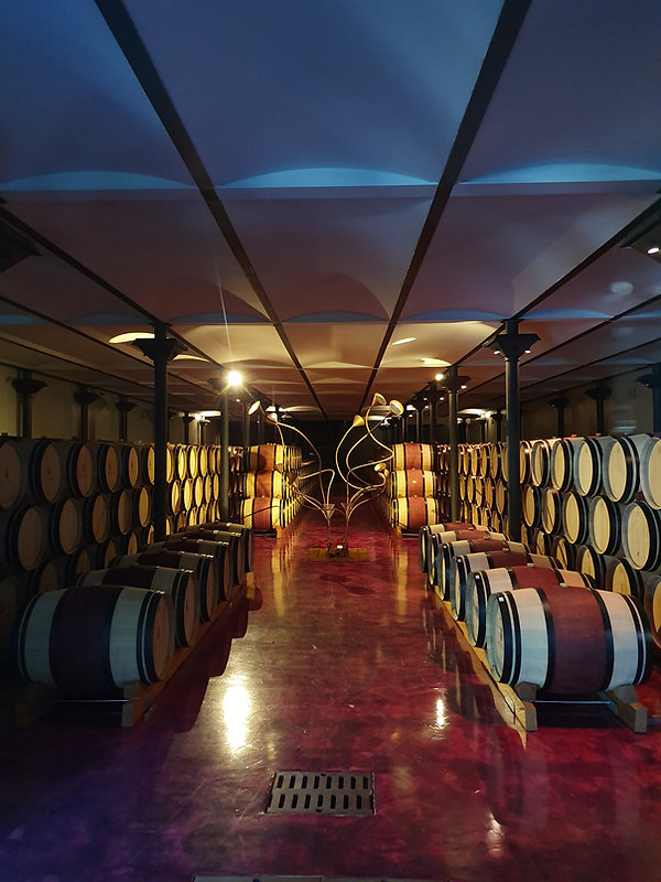 Massto Wine Cellar with French Oak Barrels filled with Ornellaia Super Tuscan Red Wine!