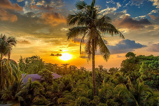 Gazing from high above a djungle floor of palms and green vegetation towards a beautiful, varm sunset bathing in yellow tones.