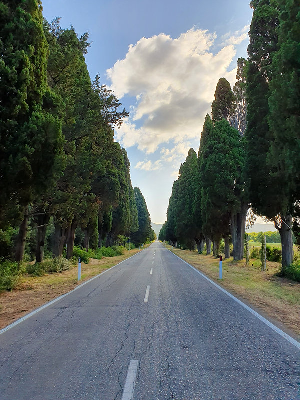 Cypress Avenue, the road to Bolgheri in Tuscany, Italy. The famous italian wine region and the home of Super Tuscan Wine.