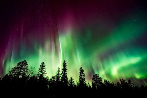 Beautiful Northern Light in Swedish Lapland. A dark forest against a sky painted in magical strokes of green, purple, yellow - the incredible phenoma called Aurora Borealis.