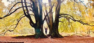 Highland Hustle Tree.jpg
