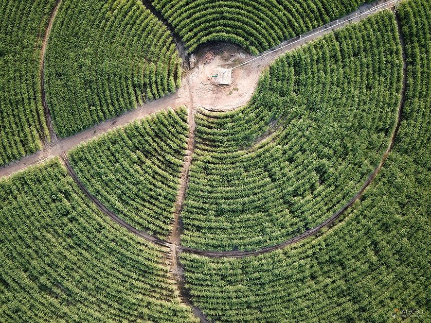 Circular Field Zambia.jpg