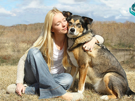 4 practical tips on how to do reiki on animals