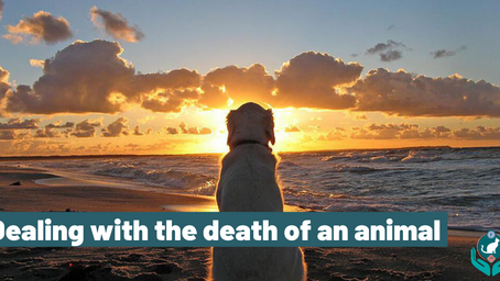 Dealing with the death of an animal