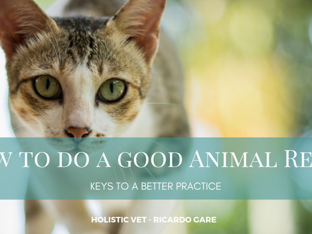 How to do a good Animal Reiki?
