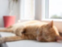 acupuntura gato.jpg