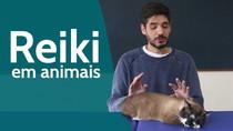 Vídeos sobre Reiki em humanos e não-humanos