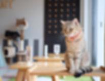 alimentação natural gato.jpg