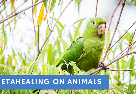 Report: animal appointment with ThetaHealing® in maritacas birds