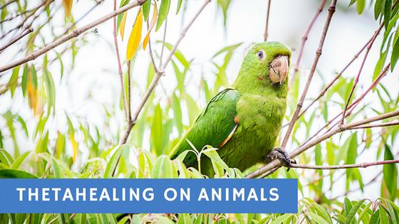 Animal ThetaHealing Holistic Vet Ricardo Gare