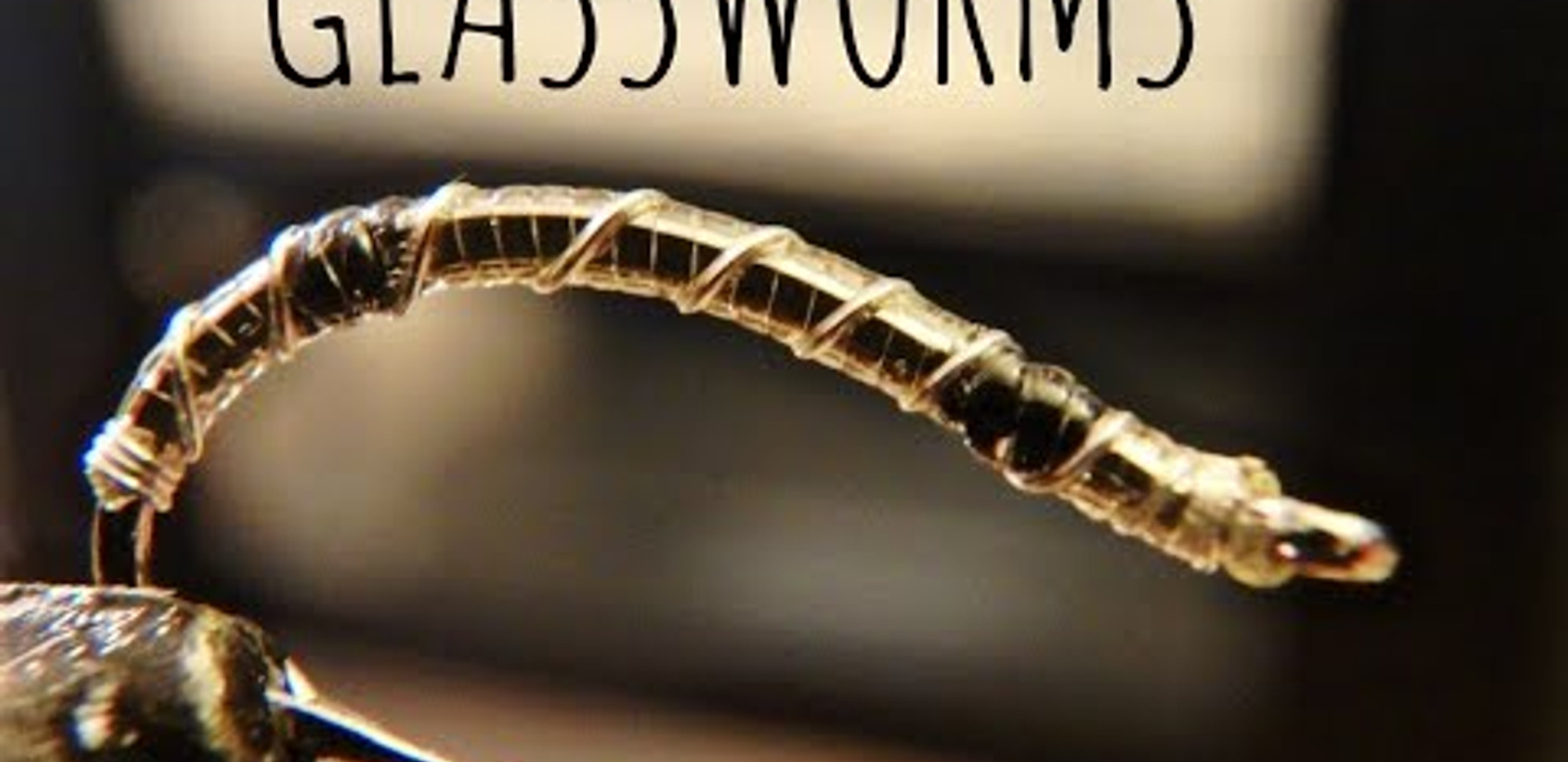Glassworms