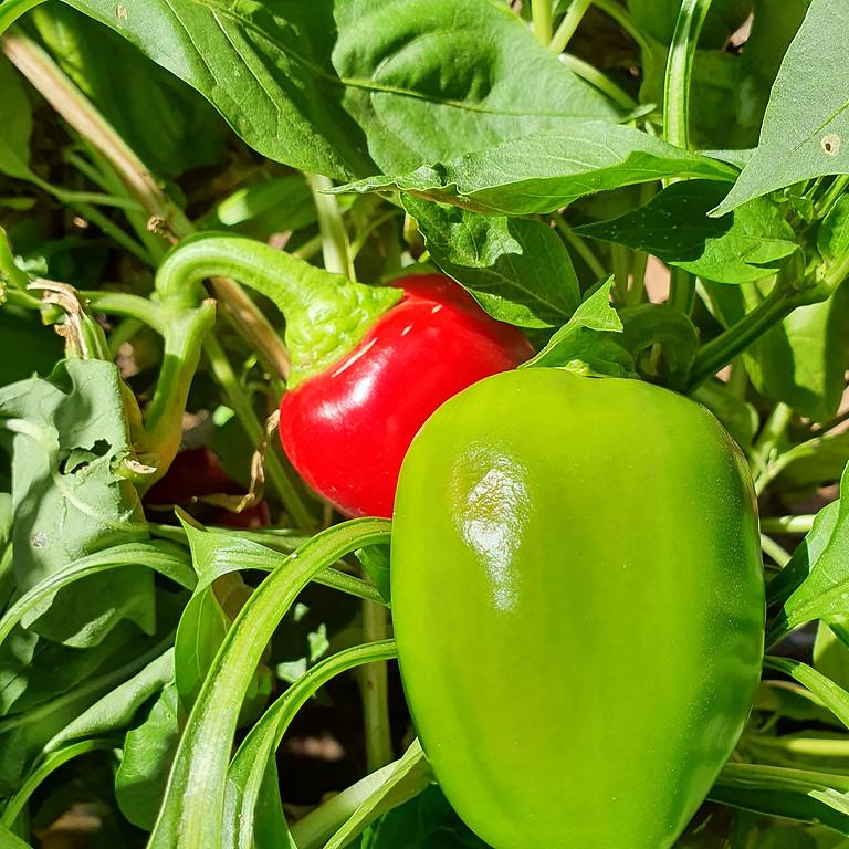 Organic Gardening - WA Museum Boola Bardip October