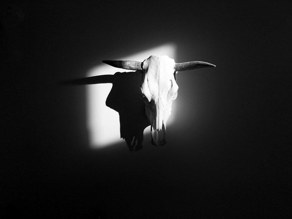 © Paul Black. Skull Shadow.jpg